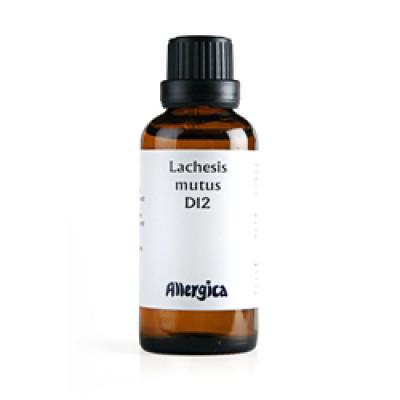 Lachesis D12 (50 ml)