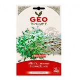 Lucernefrø økologiske til spiring - 40 gram