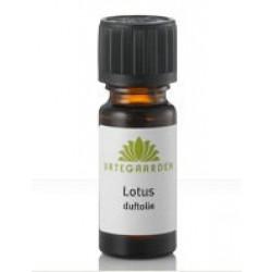 Lotus duftolie æterisk oliebl 10 ml.